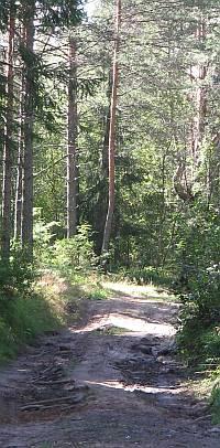 Район Рауту Сосново имеет массу возможностей для активного отдыха.