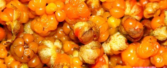 Ягода морошка, болотный янтарь, северный апельсин, арктическая малина, моховая смородина омега 6, омега 3, антиоксиданты.