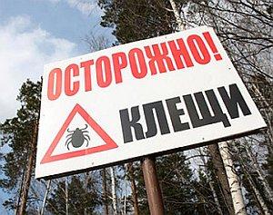 что если укусил лесной клещ в ленинградской области